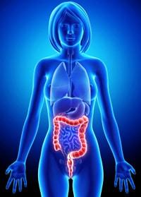 Anatomía del sistema digestivo femenino