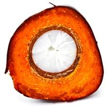 Cortar la fruta de la palma de aceite