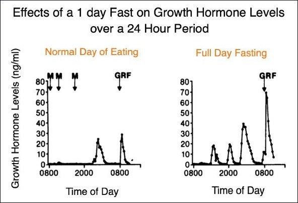 Efectos del ayuno sobre la hormona del crecimiento