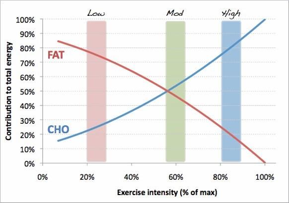 Grasa y CHO en el rendimiento del ejercicio