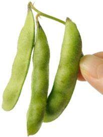 Dedos sosteniendo soja fresca