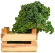 Col rizada fresca en una caja de madera