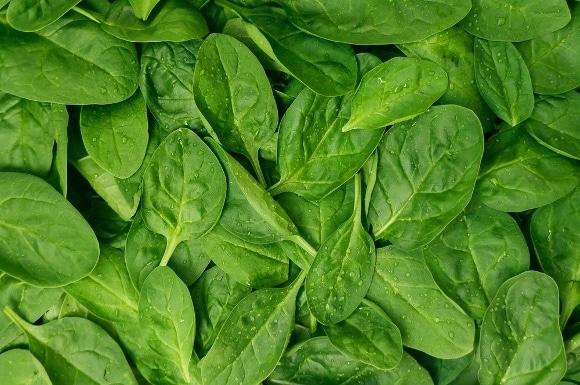 Imagen completa de hojas de espinaca fresca