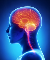 Cerebro humano iluminado