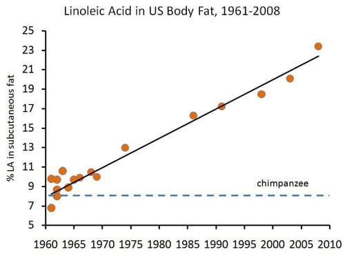Ácido linoleico en la grasa corporal humana