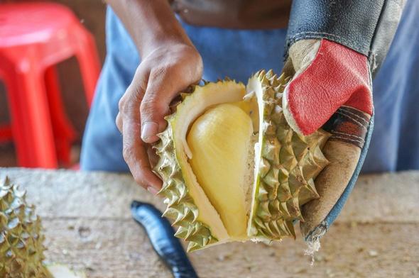 Hombre abriendo una fruta Durian con un guante y un cuchillo