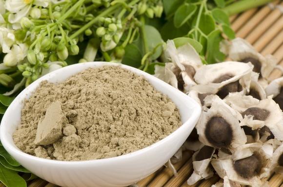 Semillas y Polvo de Moringa Oleifera