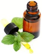 Aceite de menta y hojas