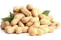 Sabrosos cacahuetes con hojas